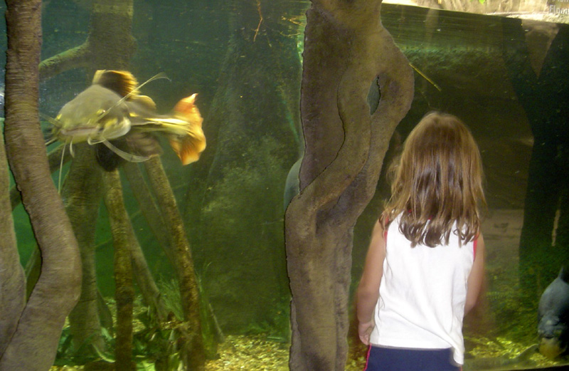 child and red-tailed Catfish