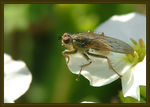 Title: Could this be another Dungfly