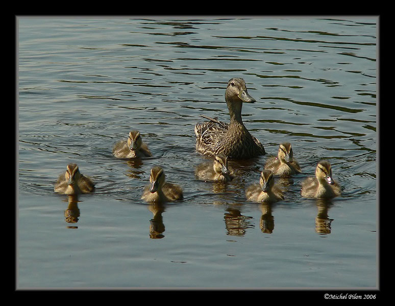 The magnificient 7 (with their mother..)