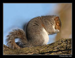 Title: Chuttt!  Squirrel praying...