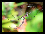 Title: Metalic Painted Spider