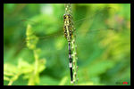 Title: Unidentified DragonflyNikon D50