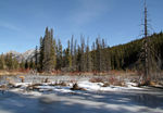 Title: Beaver Ponds in Winter