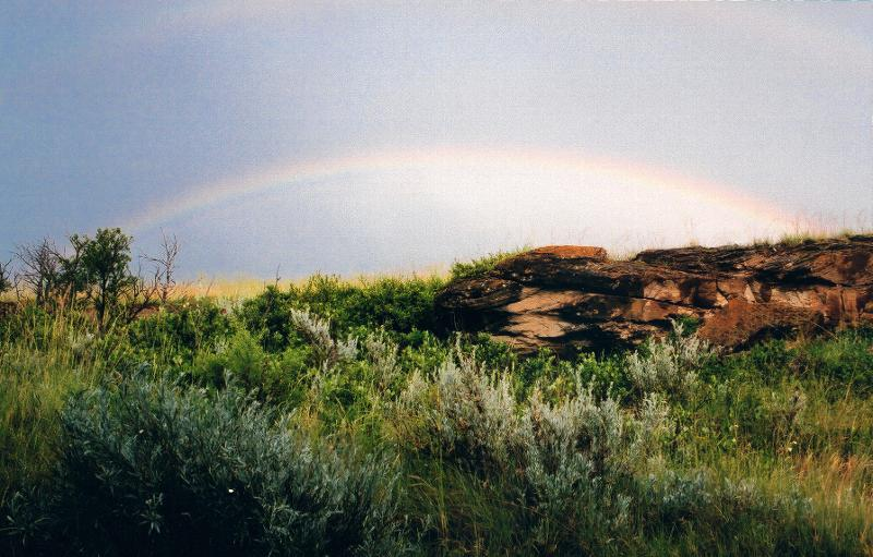 Rainbow, frogs and thunder