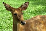 Title: Brown Antlered Deer Camera: canon s3 is