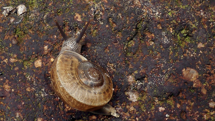 Snail on the rock
