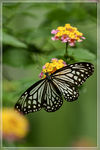 Title: I like this one (butterfly)