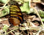Title: Glasswing with tinted glass