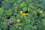 Title: RAINFOREST FROM THE AIR