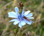 Title: blue flower and insect