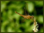 Title: ...Dragonfly#5...