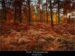 Title: Autumn in forest