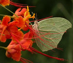 Title: Butterfly and flower