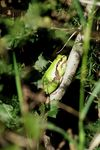 Title: Tree Frog