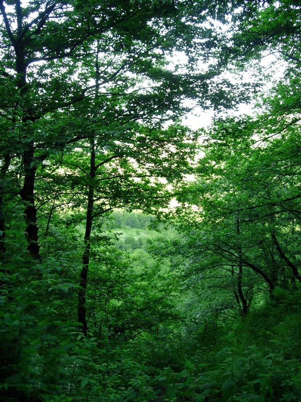 Baba Ali forest