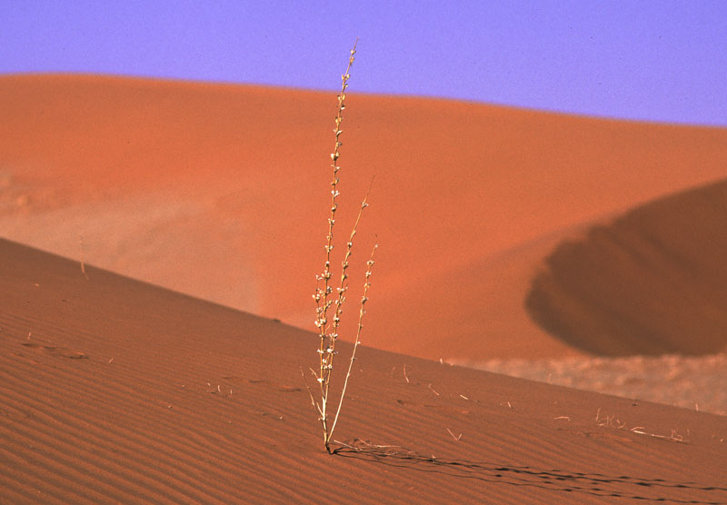 lonely in the desert