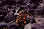 Title: flowers in the rock