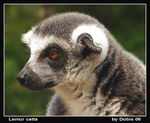 Title: Lovely LemurSony Cyber-shot DSC-H1