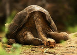 Title: Lonesome George
