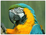 Title: Blue and Gold MacawMinolta Dimage Z5