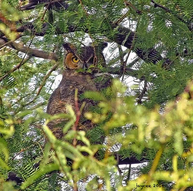 Hooting and Hiding