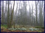 Title: snowdrops in the mist