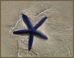 Title: Blue Starfish Camera: Sony Cyber-shot DSC-P8