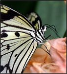 Title: My First Butterfly