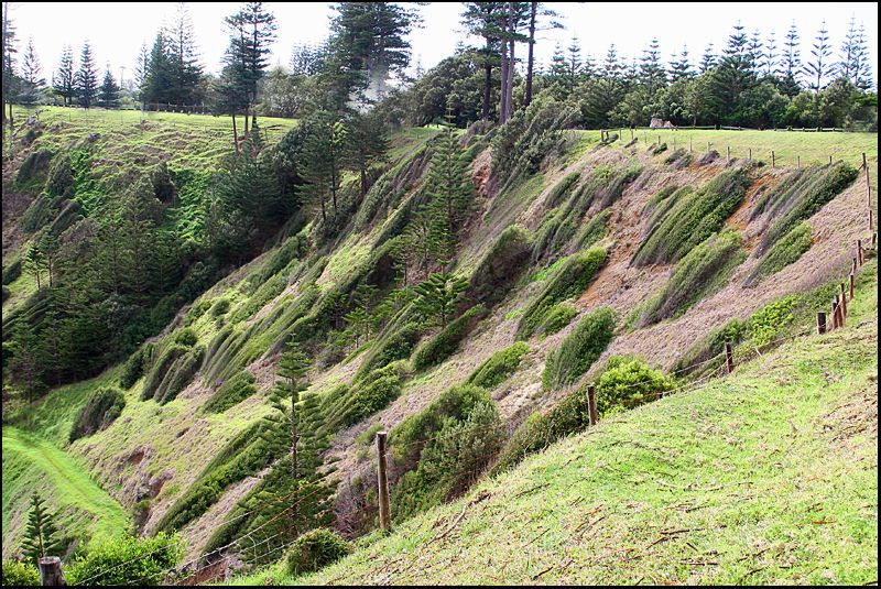 Windy Cliff on Norfolk Island