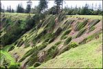 Title: Windy Cliff on Norfolk Island
