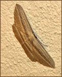 Title: Moth's Camouflage