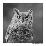 Title: Owl in black and white
