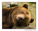 Title: Bruin before the nap