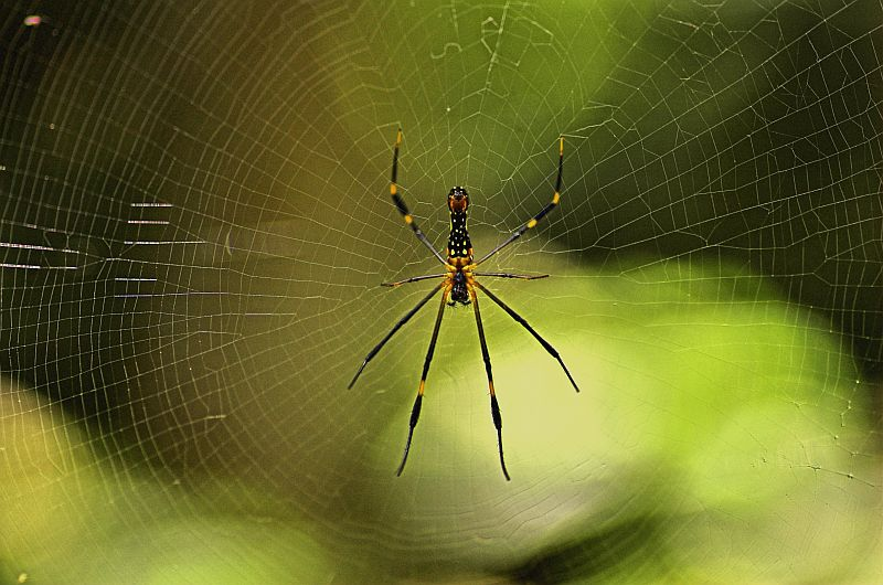 Spider..One More