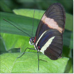 Title: Close up of a Butterfly