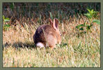 Title: Easter Cottontail