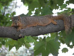 Title: Lazy Squirrel
