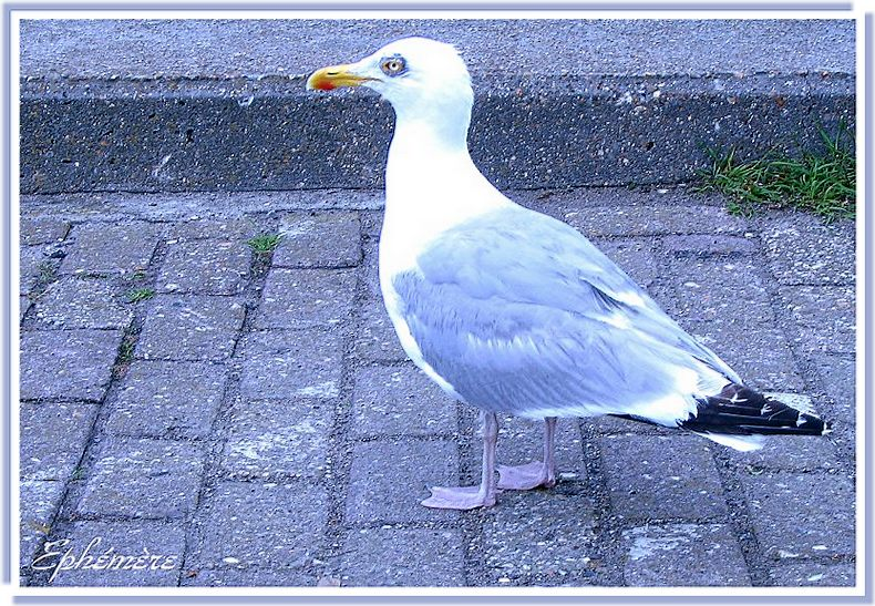 mouette,rieuse...