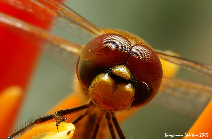 Dragonfly 14