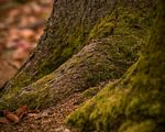 Title: Moss on Trunk