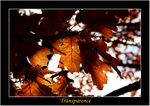 Title: Transparency