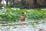Title: Lotus in Pond