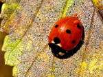 Title: Are you OK, Ladybird?