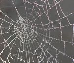 Title: Web with dew