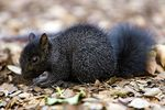 Title: Baby Squirrel