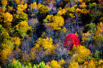 Title: Skyline Drive in Fall - 1