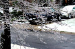 Title: Icy Branch