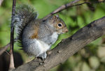 Title: Sunning squirrel