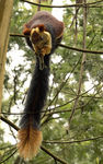 Title: Malabar Squirrel