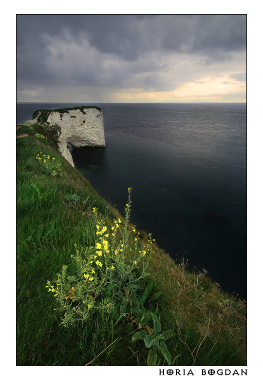 Old Harry beauties